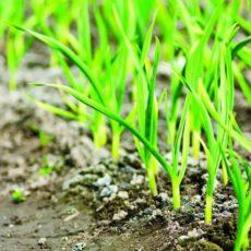 Біорегулятори росту